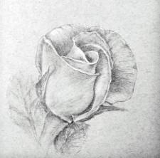 rose_no2